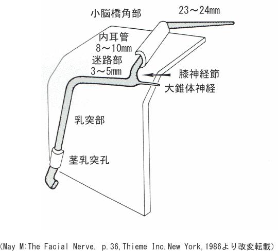 顔面神経管の走行