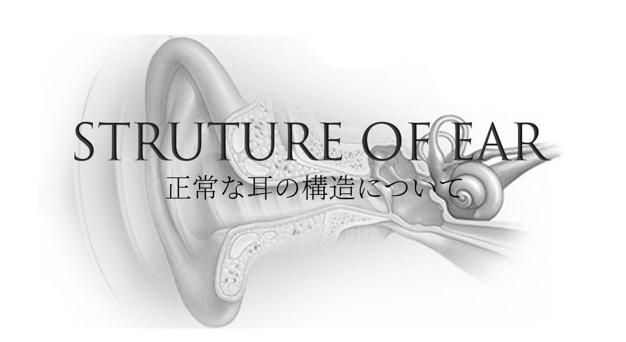 正常な耳の構造について