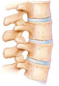 椎間板の説明図