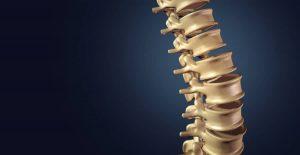 脊椎の画像